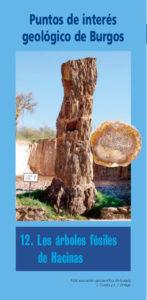 12/ Árboles fósiles de Hacinas